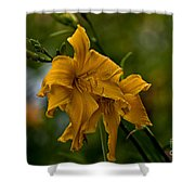 Daylily Picture 474 Shower Curtain