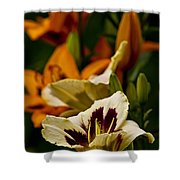 Daylily Picture 487 Shower Curtain