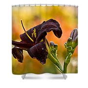 Daylily Picture 514 Shower Curtain