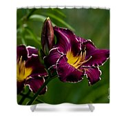 Daylily Picture 526 Shower Curtain