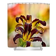 Daylily Picture 541 Shower Curtain