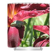 Daylily Shade For A Tree Frog Shower Curtain