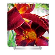 Daylily Twice Shower Curtain