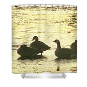 Days Love  Shower Curtain