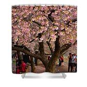 Dc Cherry Blossom Tree Shower Curtain