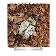 Dead Bug Shower Curtain