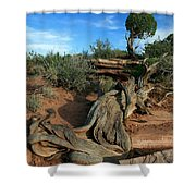 Dead Horse Point Tree 1 Shower Curtain