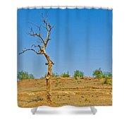 Dead Single Tree Shower Curtain