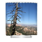 Dead Tree At Bryce Canyon  Overlook Shower Curtain