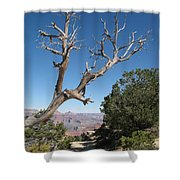 Dead Tree At Grand Canyon South Rim Shower Curtain