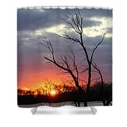 Dead Tree At Sunset Shower Curtain