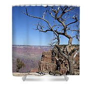 Dead Tree At The View Point Shower Curtain