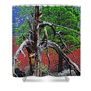 Dead Tree On Cinder At Sunset Crater Shower Curtain
