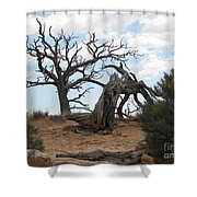 Dead Tree - Natural Bridges National Park Shower Curtain
