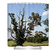 Dead Tree With Ivy Shower Curtain