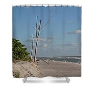 Dead Trees At The Seaside Shower Curtain
