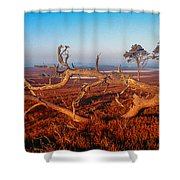 Dead Trees, Southern Uplands Shower Curtain