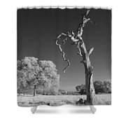 Dead Weathered Shower Curtain