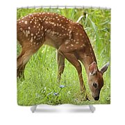 Little Fawn Blue Wildflowers Shower Curtain