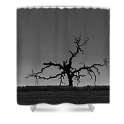 Death Of A Tree Shower Curtain
