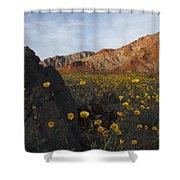 Death Valley Spring 1 Shower Curtain