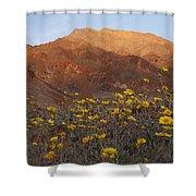 Death Valley Spring 2 Shower Curtain