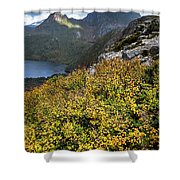 Deciduous Beech Or Fagus In Colour Shower Curtain
