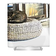 Deck Cat Shower Curtain