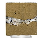 Decomposing Dead Fish Carcass Washed Ashore Shower Curtain