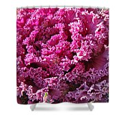 Decorative Fancy Pink Kale Shower Curtain