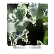 Decorative Kale With Dew Shower Curtain