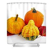 Decorative Pumpkins Shower Curtain