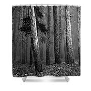 Deep Forest Shower Curtain by Leland D Howard