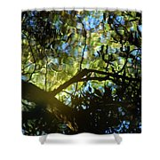 Deep Forest Light Shower Curtain