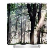 Deep Forest Morning Light Shower Curtain