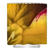 Deep In The Heart Of A Primrose Shower Curtain