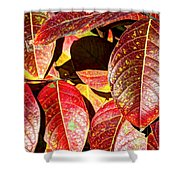 Deep Into Autumn Shower Curtain