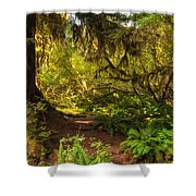 Deep Into The Hoh Rain Forest Shower Curtain