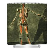 Deep Muscular System Of The Back Shower Curtain