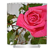 Deep Pink Rose - Summer - Rosebuds Shower Curtain