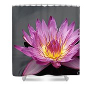 Deep Pink With Yellow... Shower Curtain