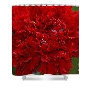 Deep Red Carnation 2 Shower Curtain