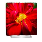 Deep Red Dahlia With Yellow Center Shower Curtain