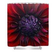 Deep Red To Purple Dahlia Flower Shower Curtain