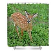 Deer 11 Shower Curtain