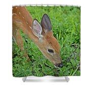 Deer 12 Shower Curtain
