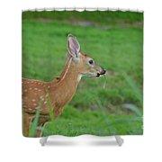 Deer 13 Shower Curtain