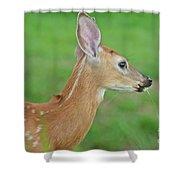 Deer 14 Shower Curtain