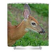 Deer 17 Shower Curtain