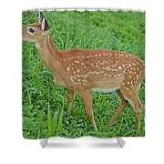 Deer 19 Shower Curtain